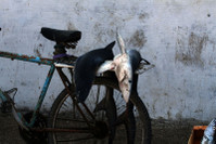 читайте про Марокко в конкурсе рассказов:)