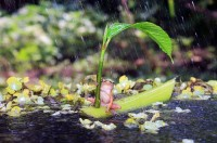 Лягушки жгут  - когда-же задует! :-)