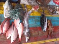 Свежая рыба на Плайа Гуакукко