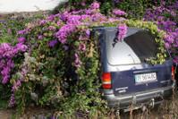 На Канарских островах утопает все в цветах...