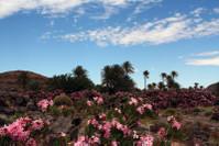самый настоящий дикий оазис в пустыне