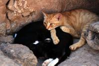 и снова коты