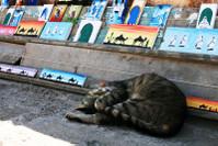 есть книжка:коты эссуэйры